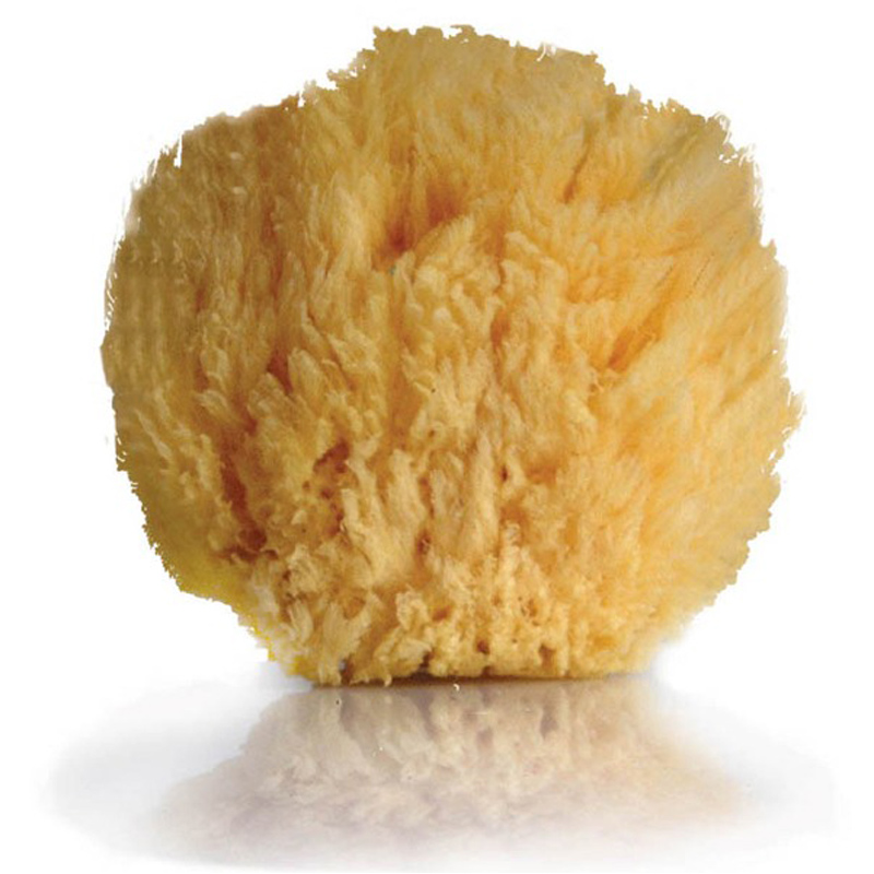Natural sea sponge from opal london wwsm for Sponge co uk